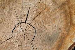 Wood Cracks. A top view of a cut-down tree trunk Stock Photography