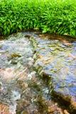 Wood creek. Wild garlic at the creek Royalty Free Stock Images