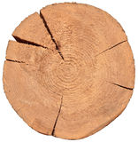 Wood cros section. Timber. tree trunk Royalty Free Stock Image