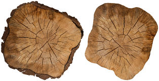 Wood cros section. Wood cross section with bark Royalty Free Stock Image