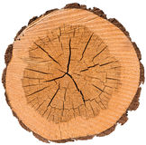 Wood cros section. Wood cross section with bark Royalty Free Stock Photo