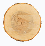 Wood cross-section Stock Images