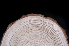 Wood cross-section with annual rings on black background. Lumber piece close-up. Wood cross-section with annual rings on black background. Lumber piece, wood royalty free stock photography