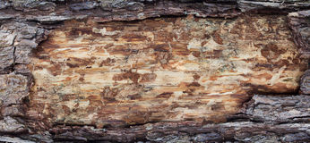 Backgrounds bark and wood texture Royalty Free Stock Photo