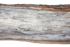 Wood cross section, backgrounds bark and wood texture on white Royalty Free Stock Photo