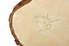 Wood cross section Royalty Free Stock Images