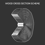 Wood cross section scheme Stock Photography