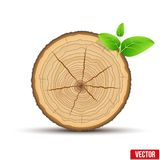 Wood Cross section of tree trunk with green leaves Stock Photography