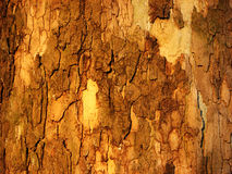 Wood crust. Grunge wood texture, rough surface and warm colors Royalty Free Stock Photos