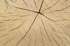 Wood cut with annual rings Stock Photo