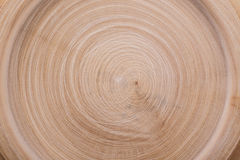 Wood cut circles texture Royalty Free Stock Image