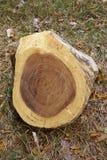 Wood cut on grass Stock Photos