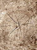 Wood in cut. Old log's cracked annual ring. Background texture Stock Images