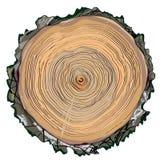 Wood cut round shape - hand drawn Stock Photo