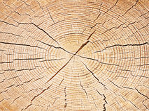 Wood cut structure Royalty Free Stock Image