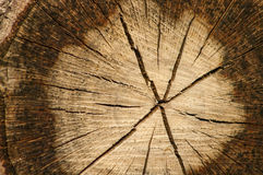 Wood cut texture Royalty Free Stock Photo