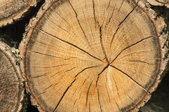 Wood cut texture. Cross section of tree trunk Royalty Free Stock Photography