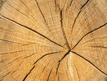 Wood cut texture Stock Photos