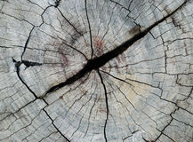 Wood cut texture royalty free stock image