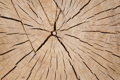 Wood cuts Stock Images