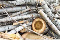 Wood cuts nature vintage background Stock Photography