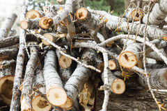 Wood cuts nature vintage background Royalty Free Stock Images