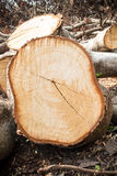 Wood cutted anddetail inside wood Stock Image