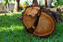 Wood cutting down on the grass Stock Image