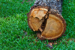 Wood cutting down on the grass Royalty Free Stock Photos