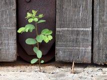Wood dörr och växt Royaltyfri Fotografi