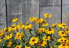 Wood and daisy Stock Photo