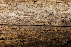 Wood damaged by bark beetle Royalty Free Stock Photography
