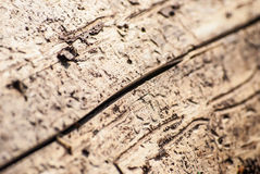 Wood damaged by bark beetle Royalty Free Stock Images