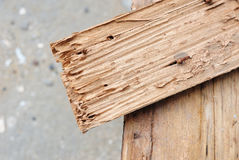 Wood damaged by termite Stock Photo