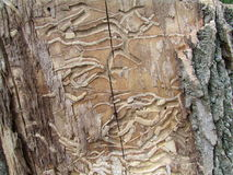 Wood damaged by termites, Edison, USA. Г. Part of old tree damaged by termites in Roosevelt Park, Edison, NJ Stock Photo
