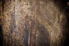 Wood damaged by woodworm. Log damaged by borer as a background, woodworm Stock Images