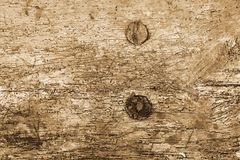 Wood damaged by woodworm Royalty Free Stock Image