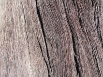 Wood of a Dead Camelthorn Tree in Dead Vlei, Namibia Royalty Free Stock Photos