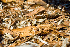 Wood debris  Stock Images