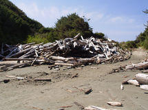 Wood Debris Pile Royalty Free Stock Photography