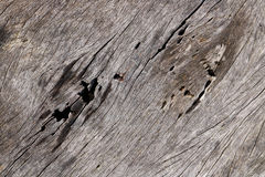 Wood decay background. Detail of Wood decay background Stock Photography