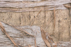 Wood decay Stock Photography