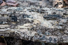 Wood decay from termite. Closeup Stock Image