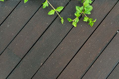 Wood deck floor. With some green leaves for background design royalty free stock photos