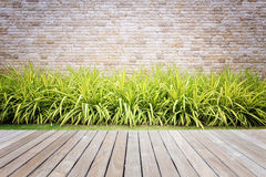 Wood decking or flooring and plant in garden decorative Royalty Free Stock Photography