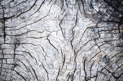Wood detail. The old timber is located outdoor Royalty Free Stock Photos