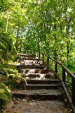 Wood and Dirt Stairs in a Tropical Jungle Stock Photography