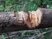 wood for domestic purpose of srilanka royalty free stock photos