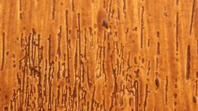 Wood door grain Stock Images