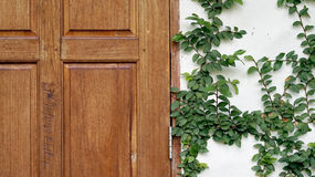 wood door and green wall texture Stock Photos